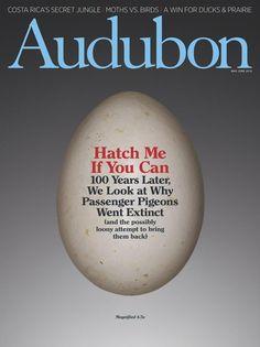 Past issues | Audubon