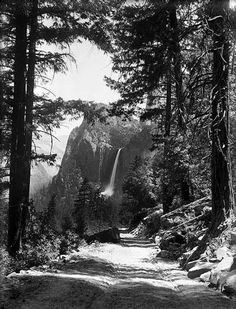 ansel adams most famous photographs flowers