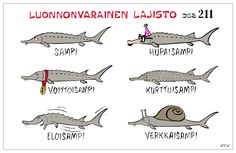 Learn Finnish, Learning, Words, Funny, Animals, Design, Languages, Historia, Animales