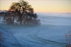Stop and see the beauty of a Frosty Morning. Majestic Oak along I-5 just past Jelly's Ferry in Red Bluff, CA.