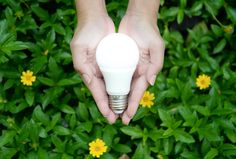 Go Green: Tips to Make Your Rental Home Eco-Friendly - http://propalliance.com/2016/10/go-green-tips-make-rental-home-eco-friendly/