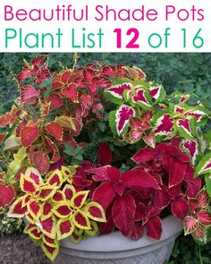 Create beautiful shade garden pots with easy shade loving plants & flowers. 16 colorful mixed container plant lists & great design ideas for shade gardens! – A Piece of Rainbow planters Potted Plants For Shade, Shade Plants Container, Best Plants For Shade, Potted Plants Patio, Fall Plants, Container Flowers, Container Gardening, Pot Plants, Plants Indoor