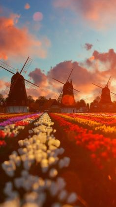 Tulips field background Amazing live for your iPhone XS from Everpix Samsung Wallpapers, Motion Wallpapers, Iphone Wallpaper Video, Ocean Wallpaper, Phone Screen Wallpaper, Music Wallpaper, Live Wallpapers, Nature Wallpaper, Aesthetic Wallpapers