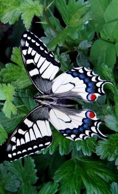 "Butterfly - great shot. The contrasting colors of the butterfly ""pop"" against the green foliage."
