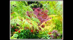 The cottage garden 2014