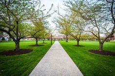 Trees along a walkway at Hood College, in Frederick, Maryland. Photo Print on Metal, Canvas or Framed Print Wall Art Home Decor. Wall Art Prints, Framed Prints, Canvas Prints, Hood College, Frederick Maryland, Metal Wall Art Decor, Walkway, Sidewalk, Trees