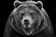 """In bianco e nero o a colori il risultato è identico: queste fotografie scattate in diversi zoo della Germania da  Wolf-Dietrich Ademeit  mostrano tutta la dignità degli animali in cattività. """"E' questo che in molti pensano delle mie immagini - dice il fotografo della Renani"""