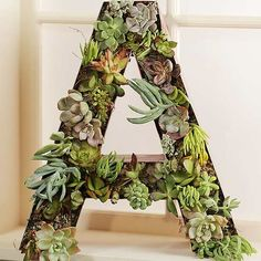 How to Make a Succulent Monogram Wreath from Antique Signage Fall Containers, Succulents In Containers, Container Plants, Container Gardening, Gardening Tips, Succulent Wreath, Succulent Wall, Succulent Terrarium, Terrariums