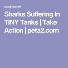 Sharks Suffering In TINY Tanks | Take Action | peta2.com