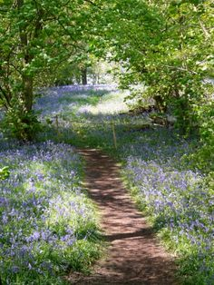 Yoxall Lodge Bluebell Woods, UK  Love those English bluebells