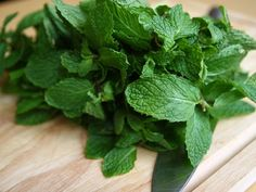 The many benefits of Mint:   - The aroma of mint activates the saliva glands in our mouth as well as glands which secrete digestive enzymes, thereby facilitating digestion.  -  Mint's aroma is also an excellent and quick remedy for nausea and effective in opening up congestion of nose, throat, bronchi and lungs.  - Mint juice is an excellent skin cleanser. It soothes skin, cures infections, itching, and is also good for pimples.   - Mint helps in eliminating toxins from the body.