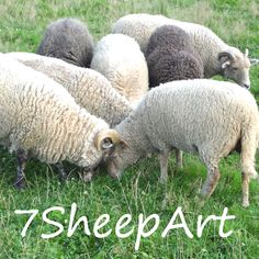 7 SheepArt