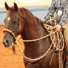 1000 Images About Rawhide Hackamores On Pinterest