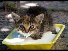 La ternura reflejada en un vídeo: pequeñas mascotas bebiendo su leche