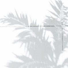 Palm leaf shadow photography shadows I'm a Happyholic Black And White Aesthetic, Aesthetic Colors, Aesthetic Pictures, White Aesthetic Photography, White Feed, White White, White Wallpaper, Shades Of White, Belle Photo