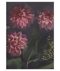 Flora with Berries Limited Edition Art Print by The Adventures Of