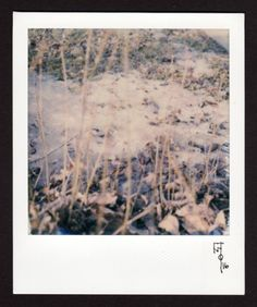 Wallace Polsom, Where the Sidewalk Ends (07 March 2016), instant photo taken with a vintage SX-70 Land Camera and Impossible Project SX-70 colour film.