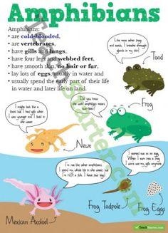 Animal Classifiations Poster – Amphibians