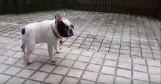 Teddy The Sweet Little Dog Plays In The Rain For The First Time via LittleThings.com