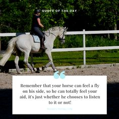 Is your horse listening to you?