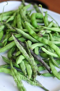 green bean harvest from my garden. how to garden on link. grow your own food, it's fun and easy.