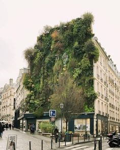 True or false: Living in a city makes it harder to be green? A trip to Paris is well worth it just to see this stunning botanical facade by Patrick Blanc. Green Architecture, Architecture Design, Paris Architecture, Interior Exterior, Exterior Design, Wall Exterior, Living Green Wall, Living Walls, Landscape Arquitecture