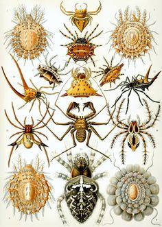 Kunstformen der Natur, Ernst Haeckel