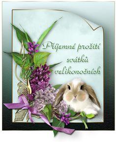 Diy And Crafts, Bunny, Spring, Cards, Humor, Cute Bunny, Humour, Funny Photos, Rabbit