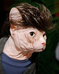 Algonquin Cat Party: Algonquin Cat Party
