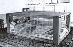Morrison Indoor air raid shelter--eating with a body in a cage below