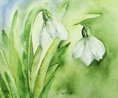 White Snowdrops Original Watercolor. Always one of the first signs of spring these delicate white snow drops bloom under the trees in our garden.   Title: White Snow Drops Image size: 4 x 6 inches (10 x 15.3 cm) Medium: Winsor and Newton Artist Quality Watercolor on 140lb Arches Coldpress Watercolor paper  This 4 x 6 painting will pop right into a standard 4 x 6 inch frame or you can purchase a standard mat and display in a larger frame.  To see more of my work go to 6catsart.etsy.com