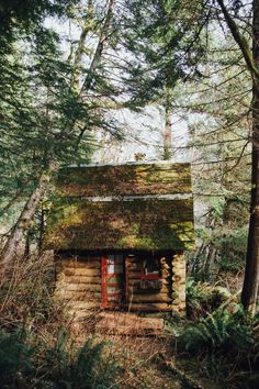 A Cozy Cottage in the Woods in Washington — Local Wanderer