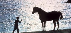 The Black Stallion  (One of my favorite movie scenes EVER!)