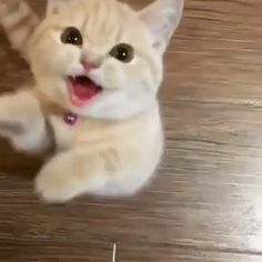 I am hungry okay ? Give me food ! Funny Cute Cats, Cute Baby Cats, Cute Cat Gif, Cute Little Animals, Cute Cats And Kittens, Cute Funny Animals, I Love Cats, Kittens Cutest, Ragdoll Kittens