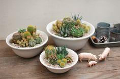 【楽天市場】【サボテン・多肉植物 寄せ植え(1点モノ)/プレーンボールポットS】:サボテン・多肉植物 SabotenStyle