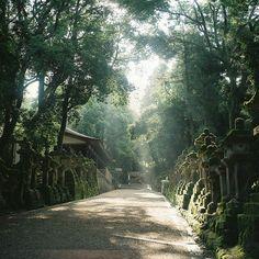 奈良の旅 14 Nara, Walk Up To Kasuga. We Used To Walk Here
