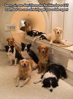 Sorry We Can't Perform A CAT Scan But We Can Certainly Get You A Lab Report cute animals dogs adorable dog puppy animal pets lol humor funny pictures funny animals funny pets funny dogs Love My Dog, Puppy Love, Funny Animal Pictures, Best Funny Pictures, Funny Animals, Cute Animals, Funny Photos, Funny Images, Dog Pictures