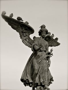 The Famous Stone Angel of the Bethesda Fountain in Central Park, NYC -- being perched on by pigeons.