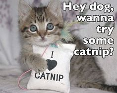 Bad kitty.