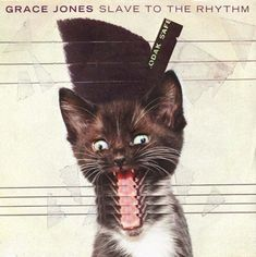Grace Jones Cat Covers | NME