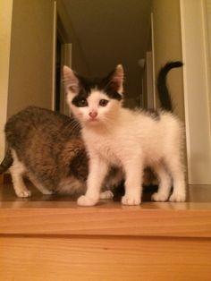 Feline Kat | Pawshake
