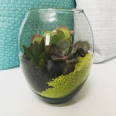 "20 Likes, 1 Comments - Miss Cellaneous (@misscellaneous.ca) on Instagram: ""#MissCellaneous #terrariums #sand #rocks #succulents #handmade #customizable #shoplocal #yyc"""