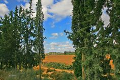 Curtain to Landscape | Flickr – Condivisione di foto!