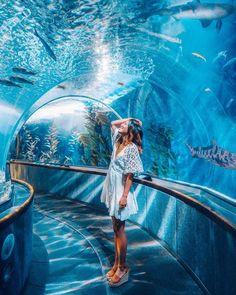 When walking down Market Street in San Francisco… just keep swimming, just keep swimming🐟🎶 Who else loves Finding Nemo as much as I do… Dubai Vacation, Vacation Places, Places To Travel, Places To Go, Dubai Resorts, Malaysia Travel, Singapore Travel, Dubai Travel, Foto Dubai