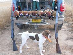 Pheasant hunting in Texas English pointer Hunting Dogs, Deer Hunting, English Pointer, Pheasant Hunting, Fishing, Wildlife, Texas, Sporty, Outdoors
