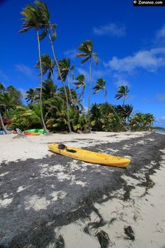 L'anse Michel et ses magnifiques cocotiers. Martinique