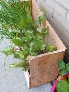 DIY Plantenbakken van wijnkistjes - DIY Planters made from old wooden wine crates