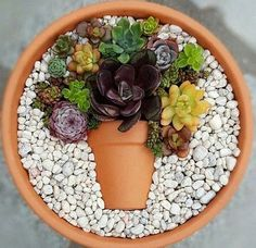 Decoration trend: Small colorful DIY succulent flower pot in a top .- Deko-Trend: Kleiner bunter DIY-Sukkulenten-Blumentopf im Topf Decoration trend: Small colorful DIY succulent flower pot in a pot pot colorful - Succulent Gardening, Succulent Terrarium, Cacti And Succulents, Planting Succulents, Planting Flowers, Succulent Ideas, Succulent Display, Organic Gardening, Garden Terrarium
