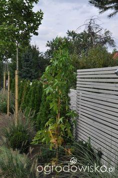 Lawendowy zawrót głowy - strona 770 - Forum ogrodnicze - Ogrodowisko Outdoor Structures, Plants, Planters, Plant, Planting