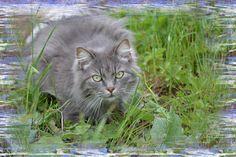 Photo Mask - Color Scratches Altro editore free on line che in maniera semplice e veloce permette di aggiungere una cornice ad una foto.